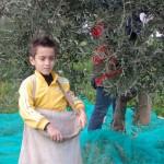 Frantotipico - Giochiamo a fare l'olio... I bambini raccolgono le olive
