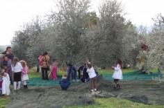 frantotipico-bambini-tra-olivi